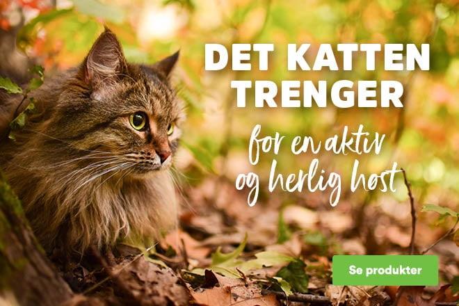 Kattens høst