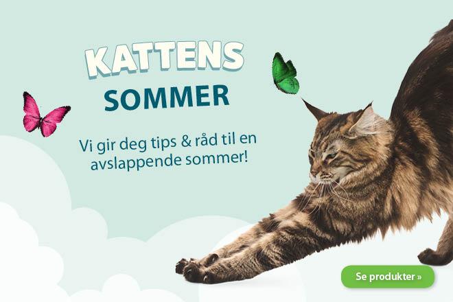 Kattens sommer