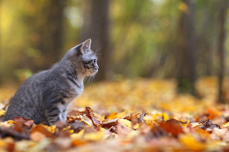 Höst med katt