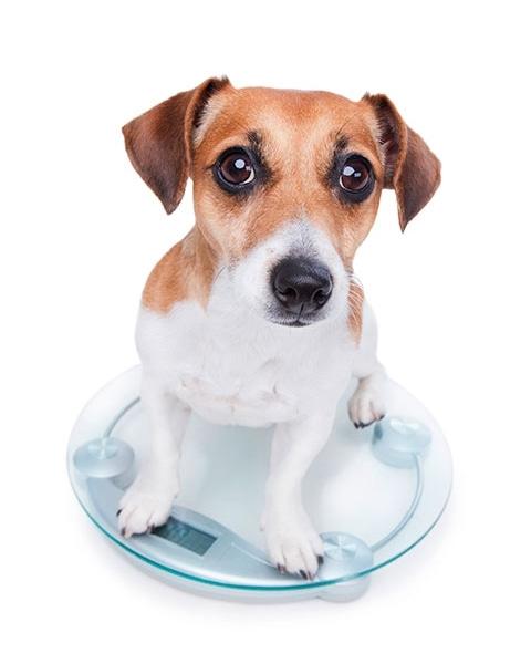 Hundens vikt
