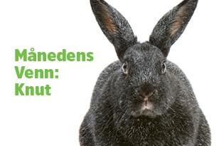 Kaninen Knut er månedens venn!