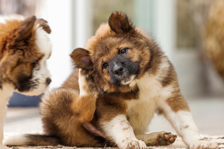 Hund med tovig päls