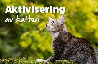 Aktivisering av katten!