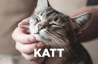 Purenatural katt