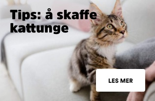 Skaffe kattunge