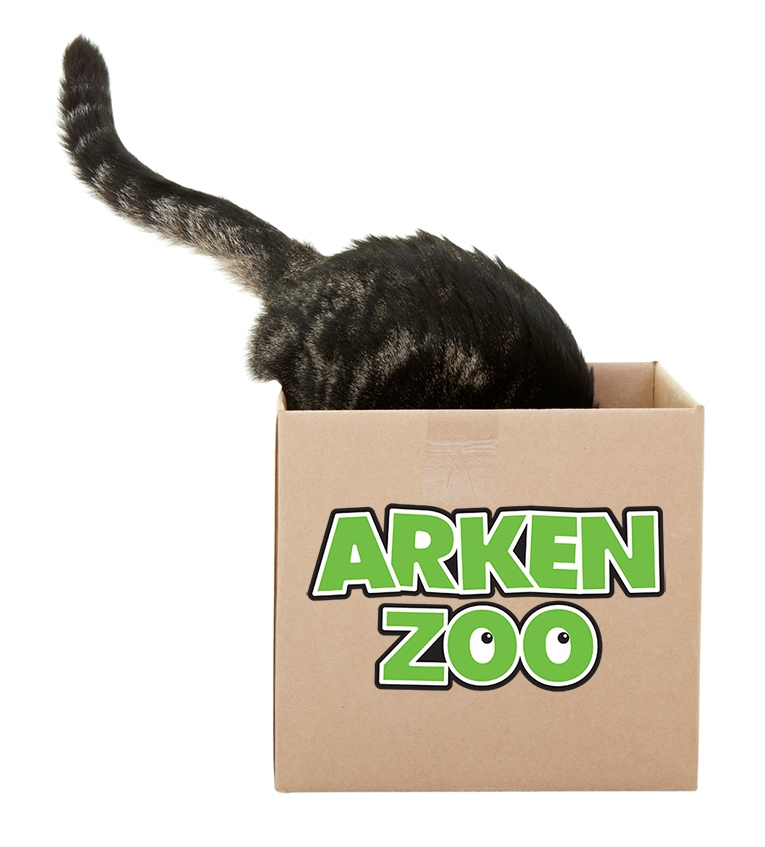 Varför älskar katter lådor?