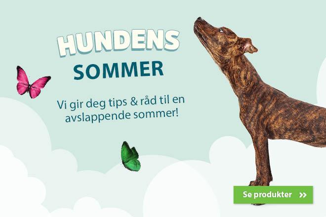 Hundens sommer
