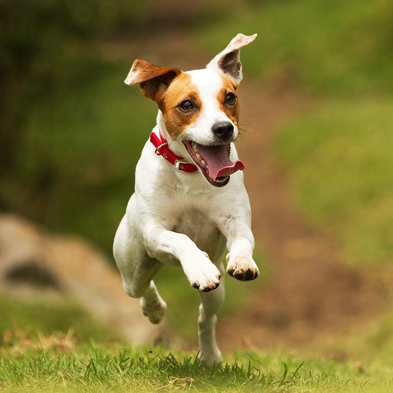 Motion skapar aptit hos din hund