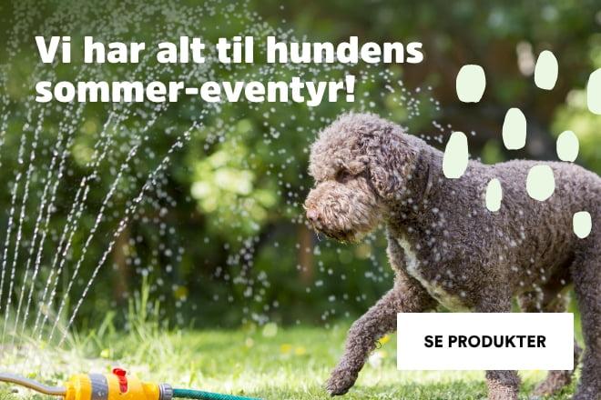 Alt du trenger til en herlig sommer med din hund