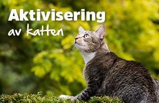 Aktivisering av katten