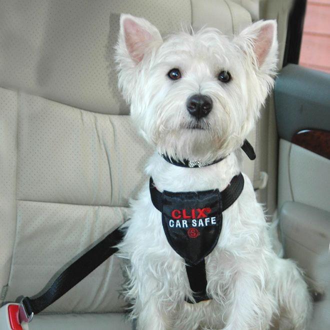 Strålande CLIX CarSafe bilsele - Hundebur / Bilbelte Hund PX-35