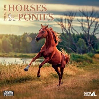 Magnet & Steel 2019 kalender Horses & Ponies**