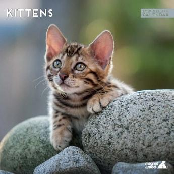 Magnet & Steel 2019 Kalender Kitten**