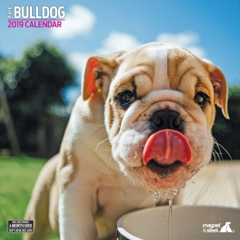 Magnet & Steel 2019 Kalender Bulldog Traditional