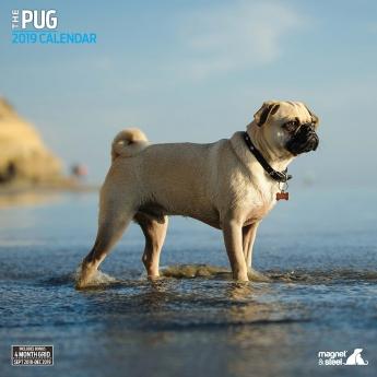 Magnet & Steel 2019 Kalender Pug Traditional**