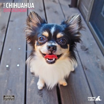 Magnet & Steel 2019 Kalender Chihuahua Traditional