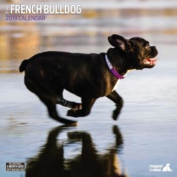 Magnet & Steel 2019 Kalender French Bulldog Traditional**