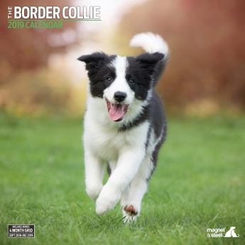 Magnet & Steel 2019 Kalender Border Collie Traditional