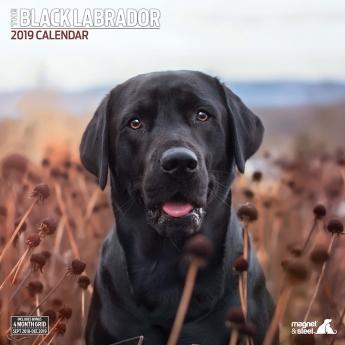 Magnet & Steel 2019 Kalender Labrador Black Traditional**