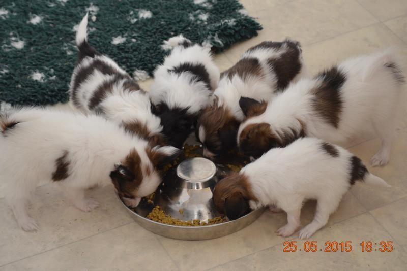 00/har-smaskar-valparna-i-sig-rc-mother-babydog-starter-00.jpg