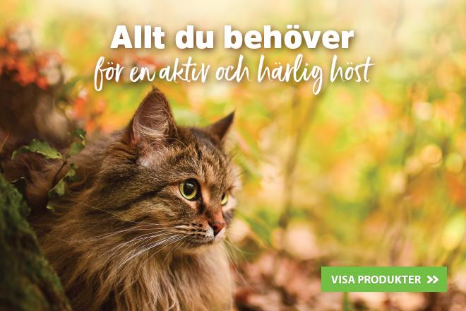 Höst tillsammans med katt!
