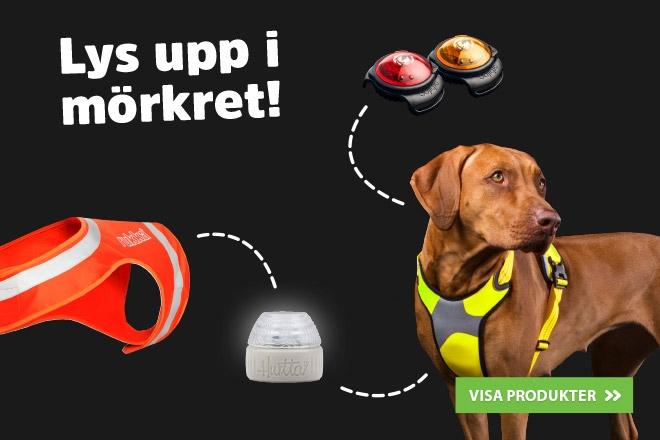 Lys upp i mörkret - Reflexer och lampor till hundar