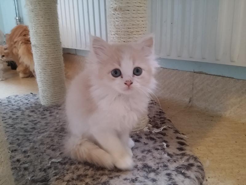 1d/en-av-de-nojda-kattungarna-1d.jpg