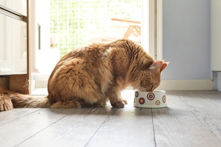 Kombinerad kost för katt