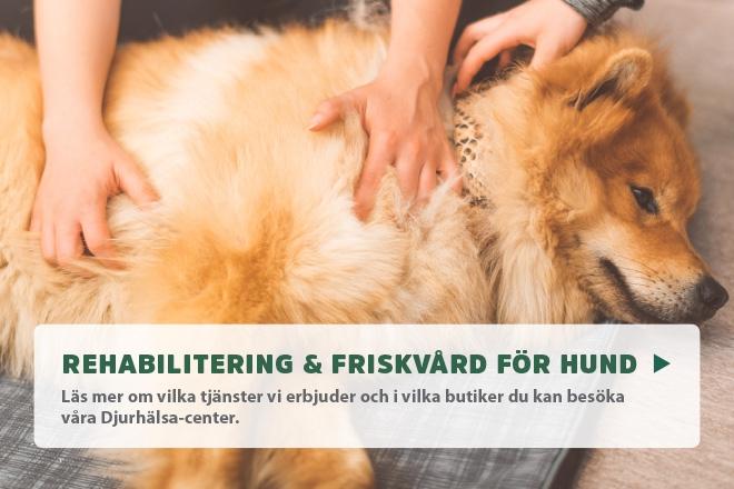 Friskvård och rehabilitering för hund