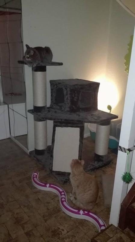 25/den-enda-bilden-jag-hittade-men-har-ser-man-iaf-hur-stor-mobeln-ar-nar-man-jamfor-med-mina-katter--25.jpg