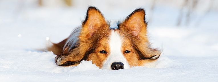 Vinter med hund