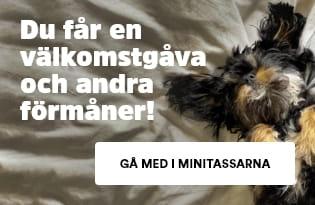 Minitassarna - Klubben för valpar