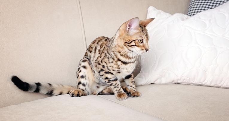 Ha som kvällsruntin att gå igenom din katts klor, mun och päls i soofan