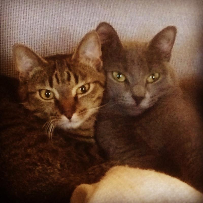 2a/tva-lyckliga-katter-2a.jpg