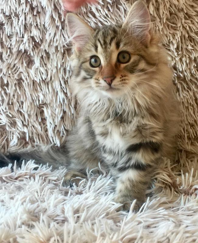 2e/jag-alskar-royal-canin-kitten-2e.jpg