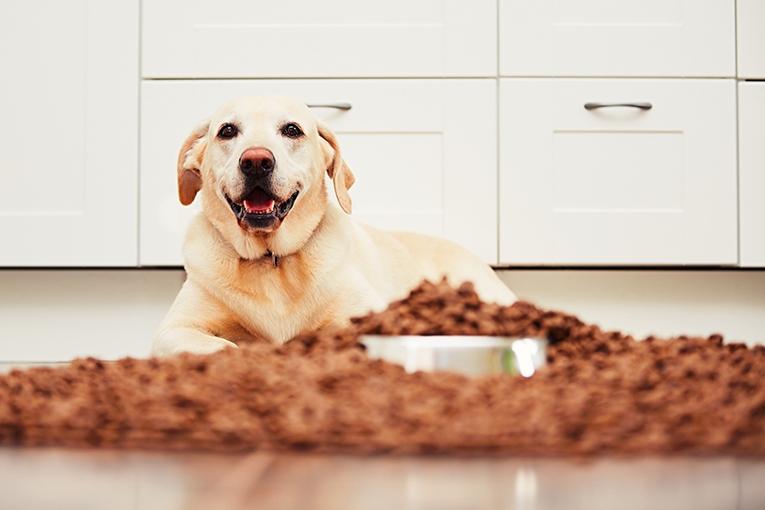 Det bästa torrfodret du kan ge din hund