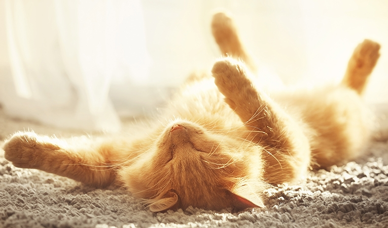 Eliminationsdiet katt