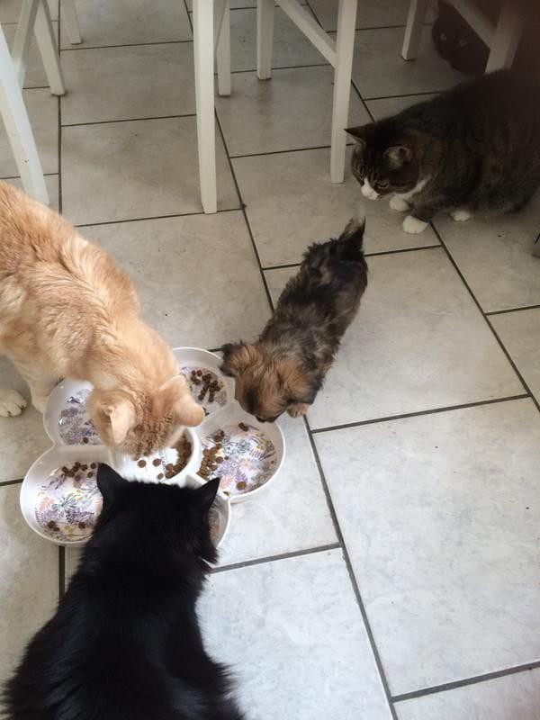 3b/har-ar-nagra-av-katterna-o-en-hund-som-ocksa-tycker-om-maten-3b.jpg