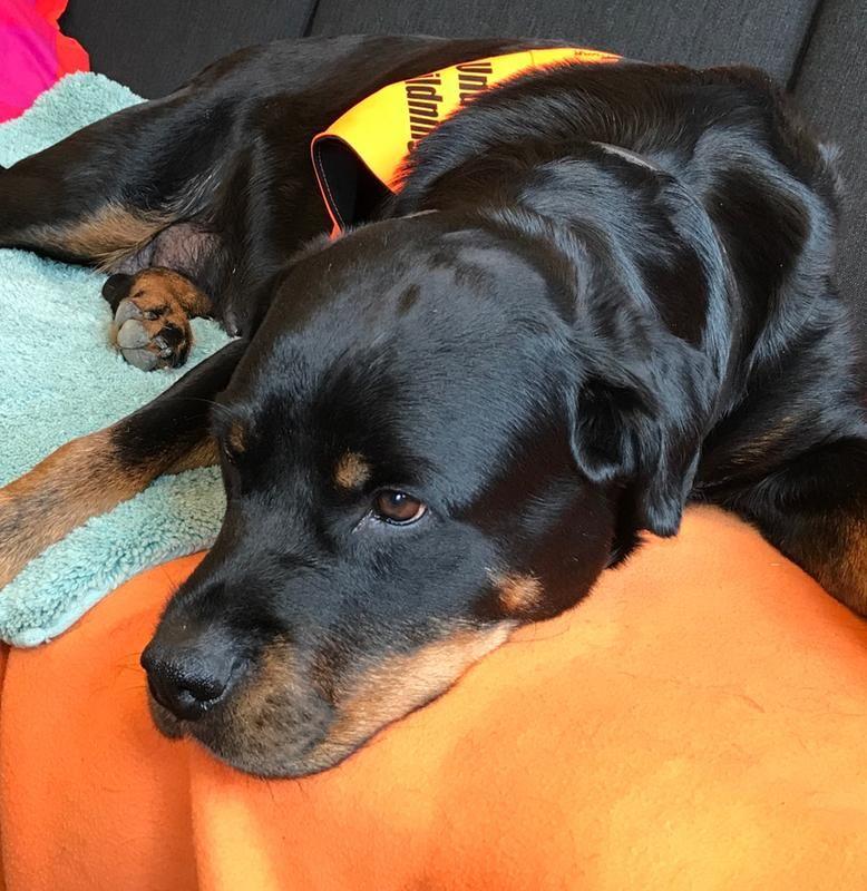 3b/pa-jobbet-som-pedagogisk-tjanstehund-3b.jpg