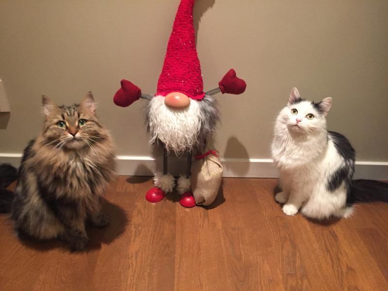 3c/god-jul-fran-sencha-och-kira-3c.jpg