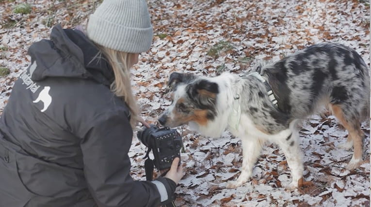 Fotoskola hund