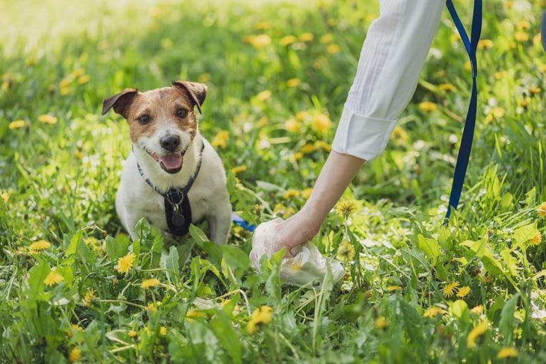 Plocka upp efter hund