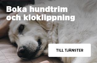 Boka hundtrim eller kloklipp