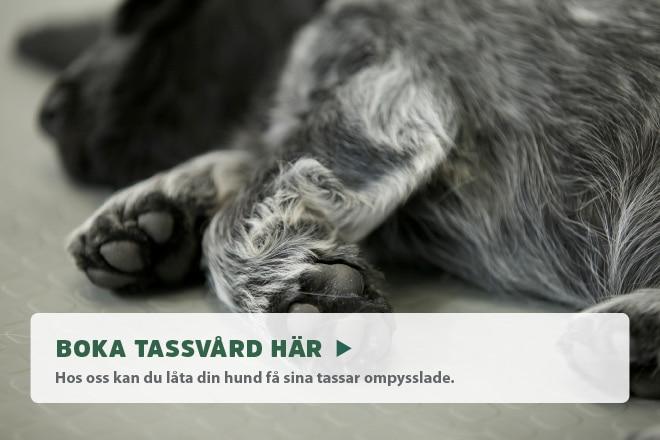Boka tassvård online!