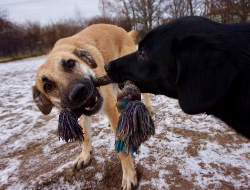 65/min-hund-baloo-till-hoger-med-kompisen-mamba-65.jpg