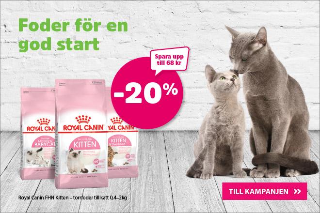 20% på Royal Canin FHN Kitten torrfoder 400 g - 2 kg