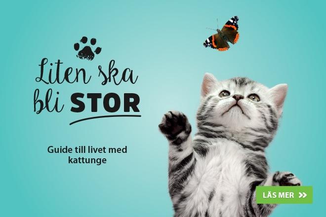 Liten ska bli stor - Guide till livet med kattunge!