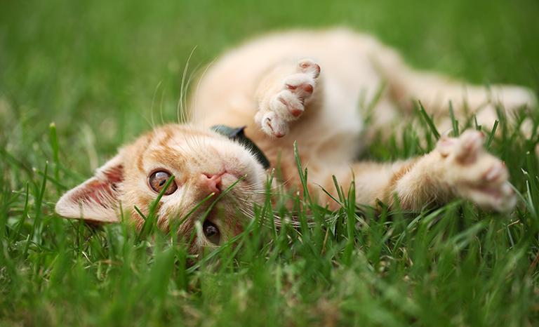 Adoptera katt