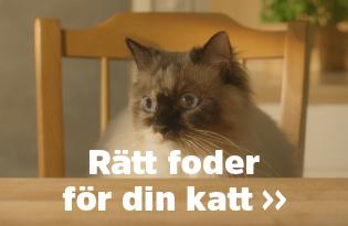 Välj rätt foder till din katt!