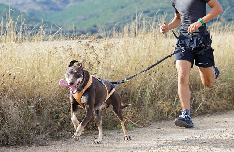 Springa med hund